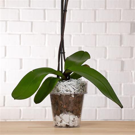 vaso orchidee vaso per orchidea trasparente vendita