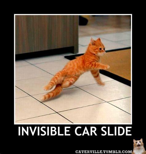 Invisible Cat Memes - random invisible cat stuff caterville