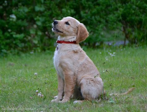 a real puppy i can sit like a real by niviholm on deviantart