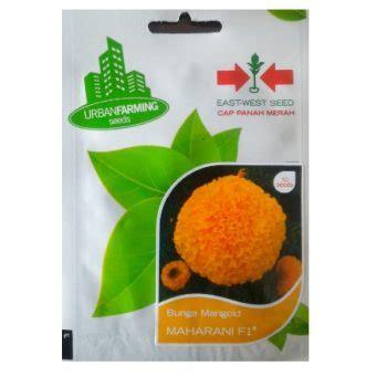 Benih Bunga Marigold Maharani 10s benih marigold maharani f1 10 biji panah merah