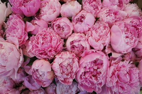 Vs Pink Flower rafia by natire deco floral