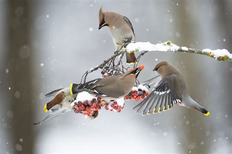 what winter birds eat good winter foods