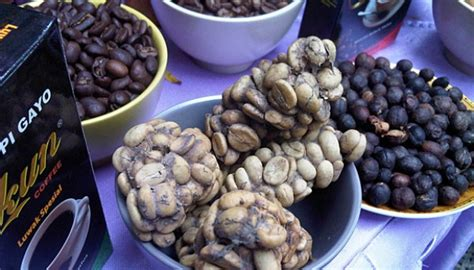 Coffee Blitar Harga kopi terbaik indonesia kopi gayo kopi gayo