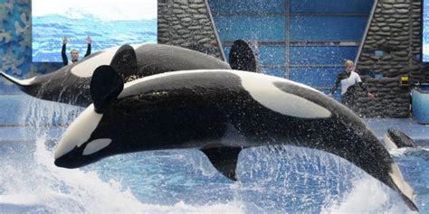 thanks to quot blackfish quot seaworld san diego will stop their
