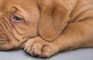 how to tell if puppy is sick how to if your is sick pet health