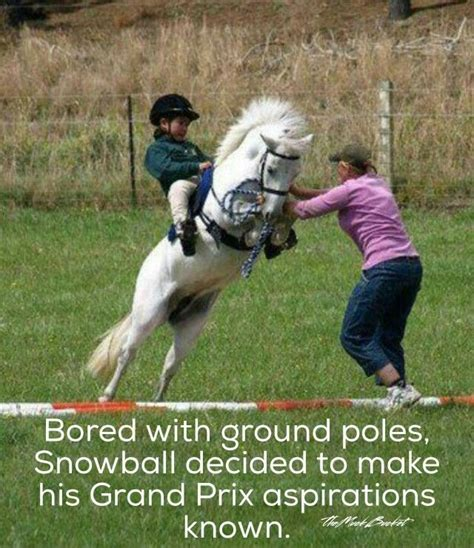 483 best horse quotes images on pinterest equestrian