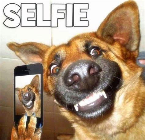 imagenes y videos graciosos im 225 genes de risa con animales chistes de mascotas para