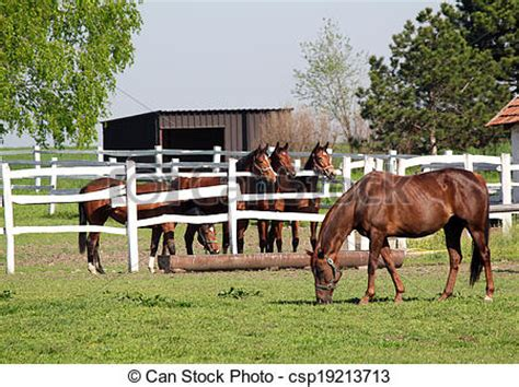 horse corral stock photos horse corral stock images alamy stock photography of horses in corral on ranch csp19213713
