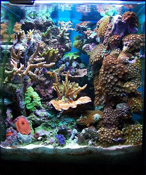 25 best ideas about reef aquascaping on reef