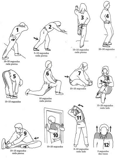 ejercicios de educacion fisica newhairstylesformen2014 com estiramientos im 225 genes y v 237 deos con ejercicios