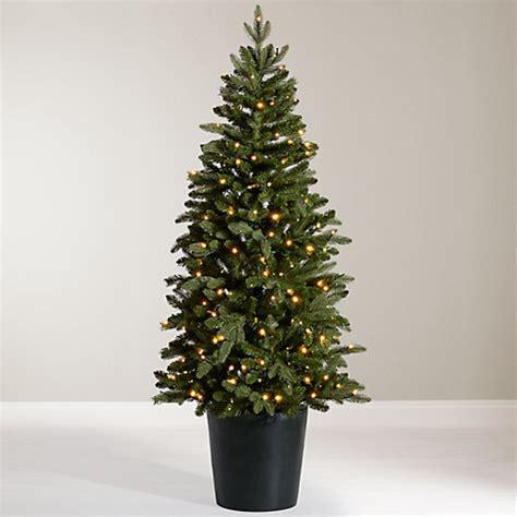 buy john lewis bala pre lit potted fir christmas tree 5