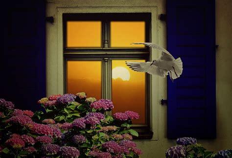 adevarata prietenie o poveste despre adevărata prietenie fereastra magică
