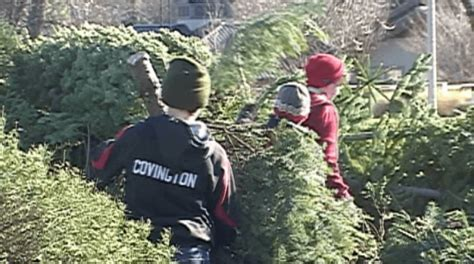 boy scouts christmas tree pick up continues in medford