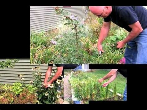 Gardening Deadheading 17 Best Images About Gardening Tips On