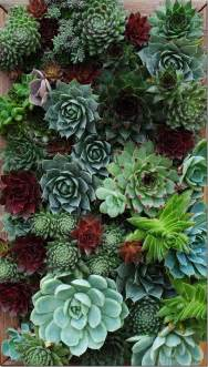 Succulent Wall Garden by Celebrating Vertical Gardening With Garden Up