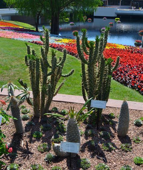 flower gardens in orlando flower gardens in orlando harry p leu gardens orlando