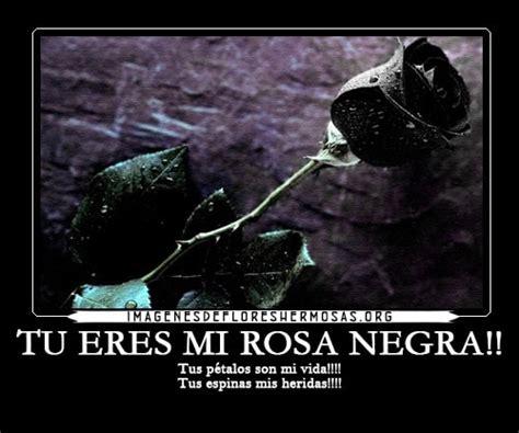 imagenes de rosas negras con frases de amor imagenes de flores hermosas google