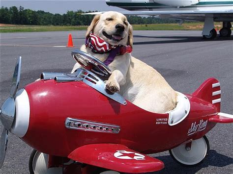 puppy travelers flying with a to key west town manor travel