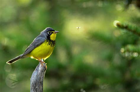 birds n stuff