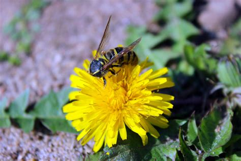 beyond reason eight great problems that reveal the limits of science ebook bee on a flower