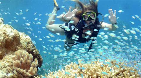 great barrier reef dive luxury great barrier reef liveaboard reef trip