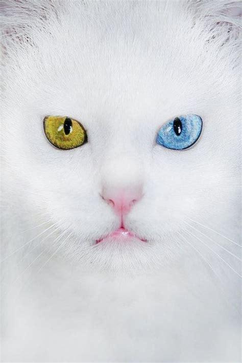 imagenes tumblr gatitos im 225 genes de gatitos animados de amor para el m 243 vil