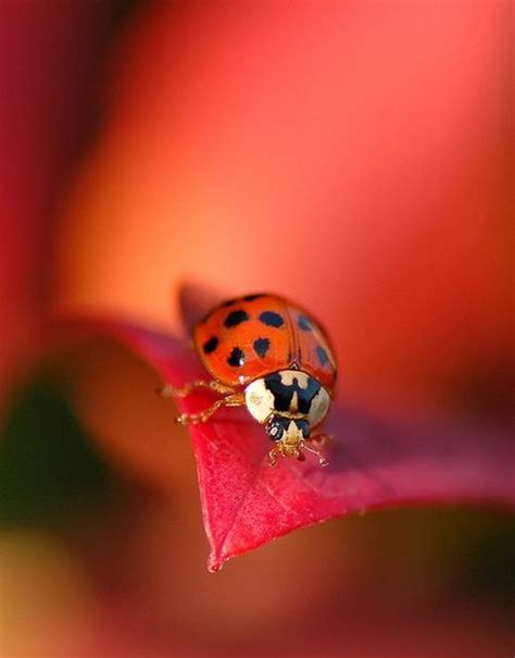 17 best images about ladybug ladybug fly away home on