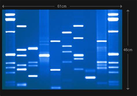 dna testing dna paternity testing sequential health llc