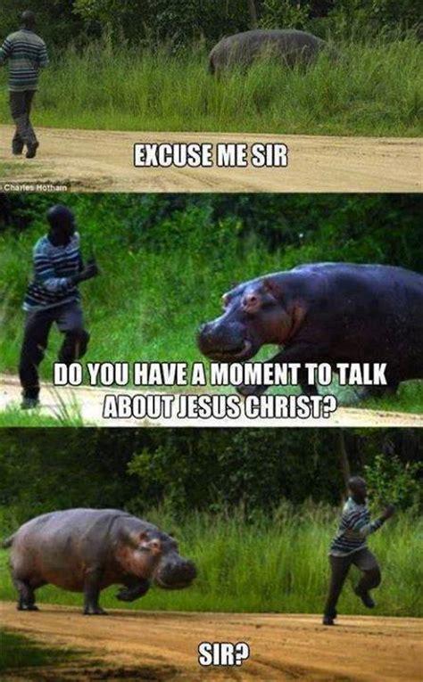 Hippo Meme - funny hippo meme