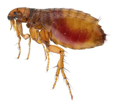 how to rid your house of fleas world pets