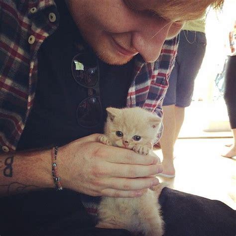 ed sheeran cats ed sheeran and boris the kitten i cats pinterest