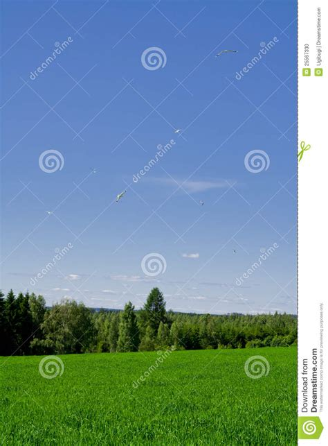green food field a royalty free stock photo from photocase green field stock photo image 25567330
