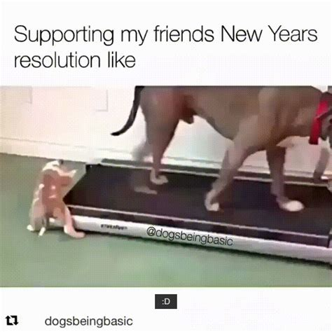 new year ram gif giphy downsized large gif