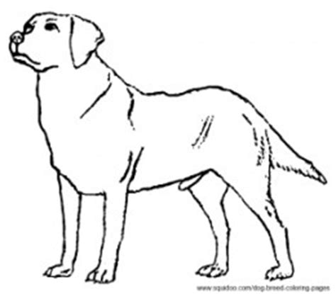 coloring pages of black lab puppies dog breed coloring pages