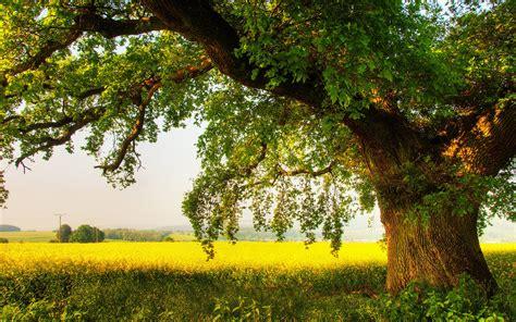 tree wallpaper 1920x1200 36289