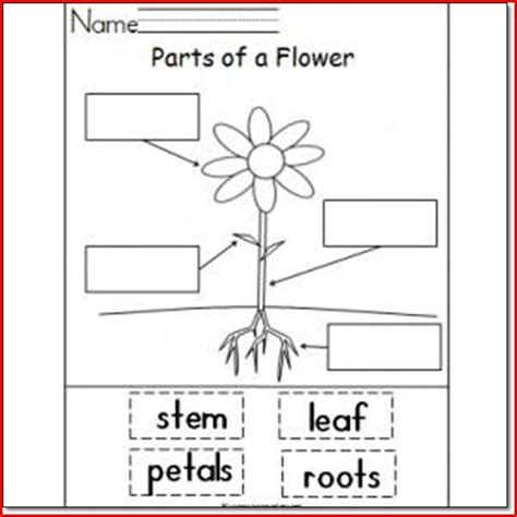 science activities for kindergarten common worksheets 187 kindergarten science preschool and