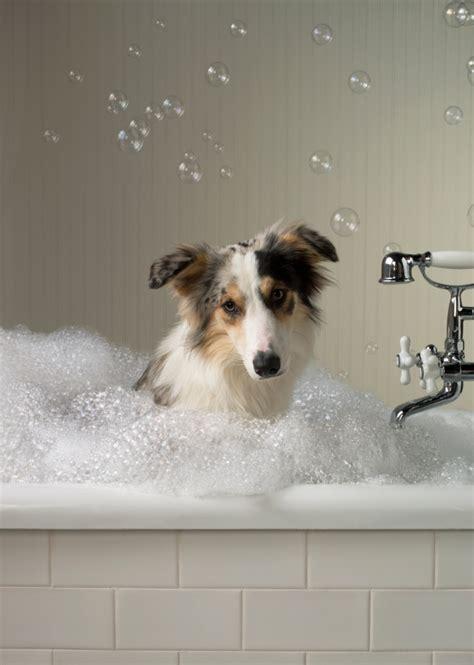 2 dogs in a bathtub как мыть купать собаку