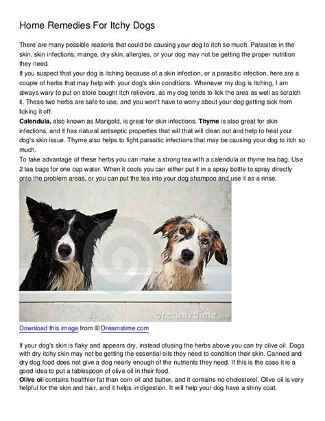 home remedies for dogs home remedies for itchy dogs