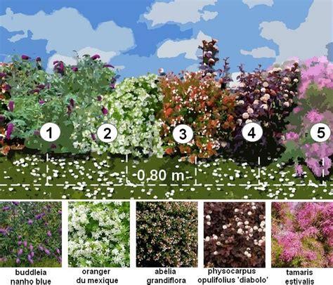 Creer Un Jardin Fleuri Toute L ée by Haie D 233 Corative Une Haie Fleurie Toute L 233 E Plans
