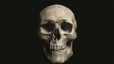 imagenes de calaveras en 3d davidgonzalez 3dartist calavera 3d 3d skull