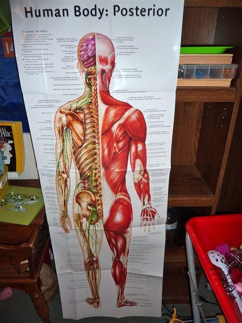 Shelf Of Human Blood by Human Anatomy Muscular System