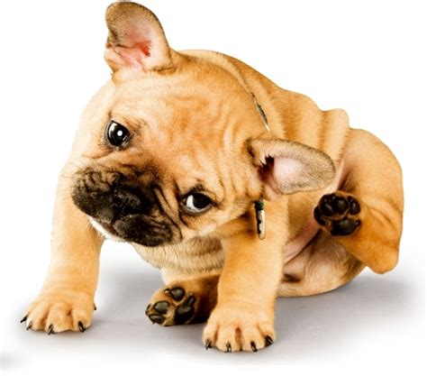 pruritus in dogs relieve the itch with nature s benadryl quercetin true carnivores
