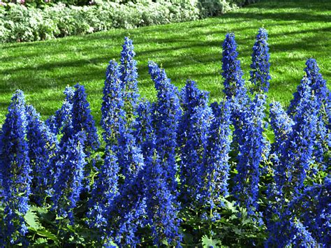 delaware gardens