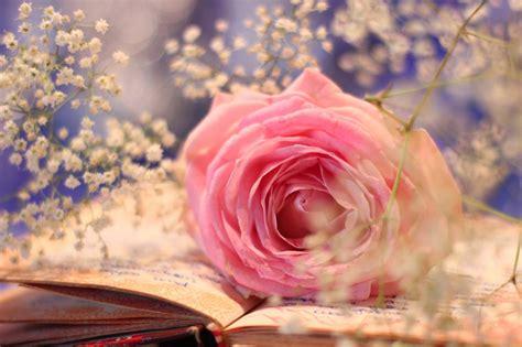 imagenes de rosas sobre libros fondos de pantalla de rosas y libros fondos de pantalla