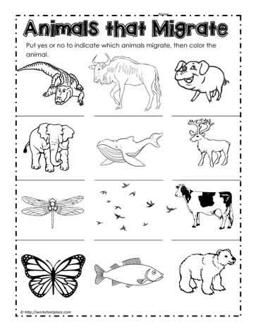 coloring pages of animals that migrate animals that migrate worksheets