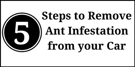 ants in car ant infestation in car how to get rid of ants from your car