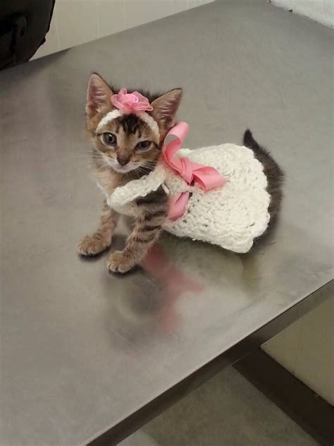 dress white cat 18807 25 best ideas about kittens in costumes on