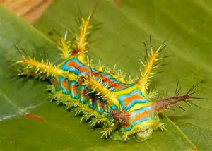 colorful caterpillar quickly quietly carefully awesome caterpillar
