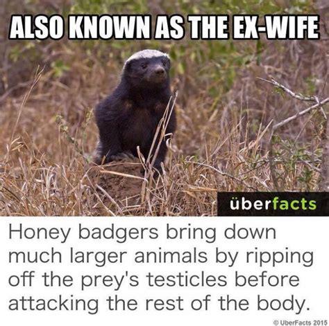 Honeybadger Meme - also known as the ex wife honey badger meme meme
