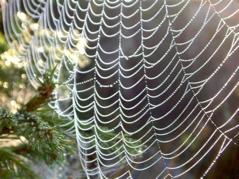 spider web christmas tradition and unique traditions